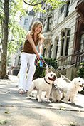 lifestyle model walking her five dogs thru city streets